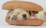 img55_hotdog1.jpg